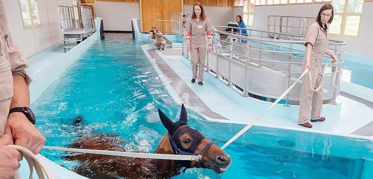 balnéothérapie chevaux athlètes