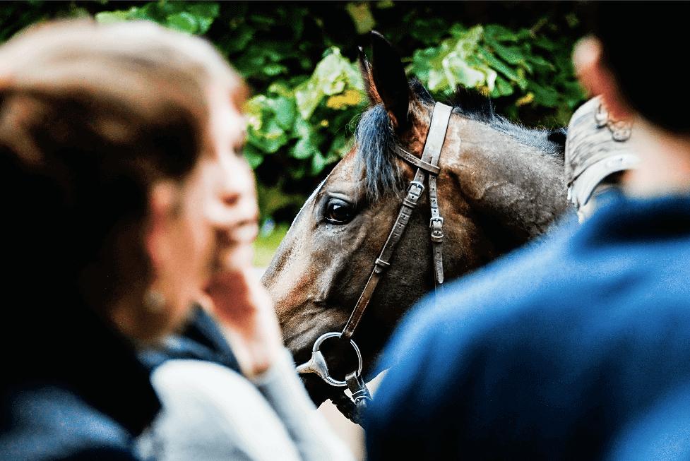 overtraining under-training racehorses