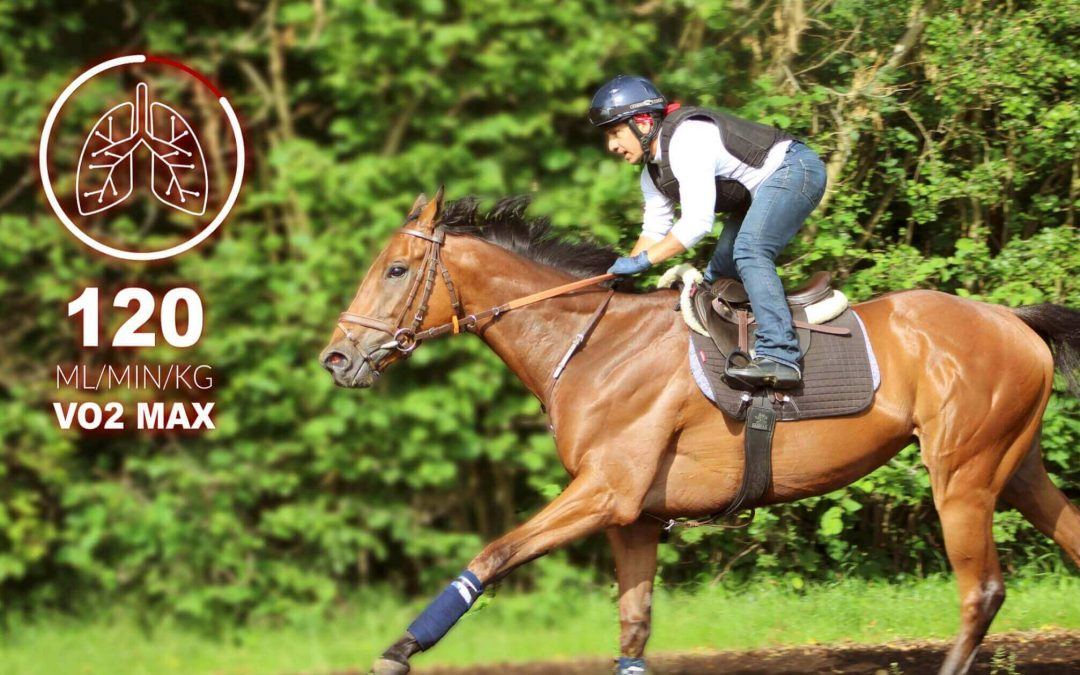 VO2Max for racehorses