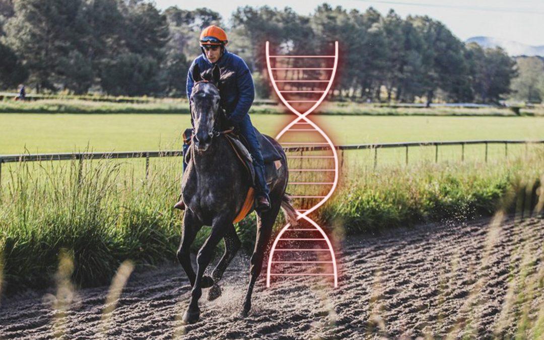 Will genetic studies revolutionize the horse racing industry?