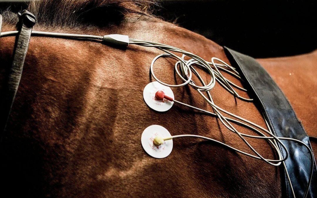 fibrillation atriale cheval de course