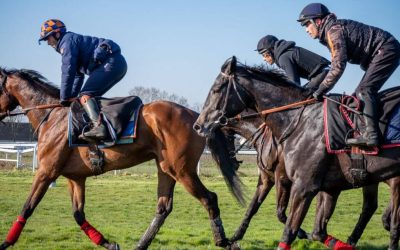 How to individualize your racehorses' training thanks to data? Two concrete examples