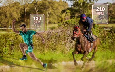 Cheval de course VS Athlète de running : quel est le rôle de la data à l'entraînement ?