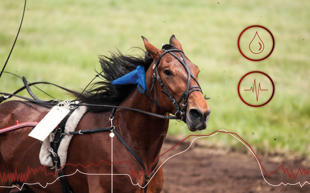 Active recovery in Standardbreds' training: what are the benefits?